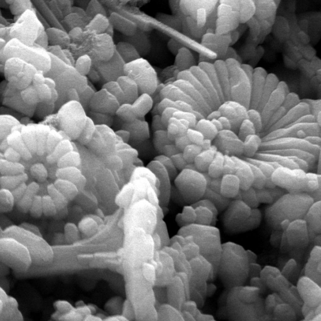 Kalkflagellaten Coccolithophorida 4
